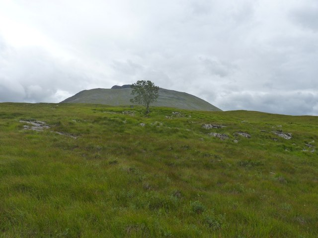 Tree on rough hillside, Beinn an Dothaidh beyond