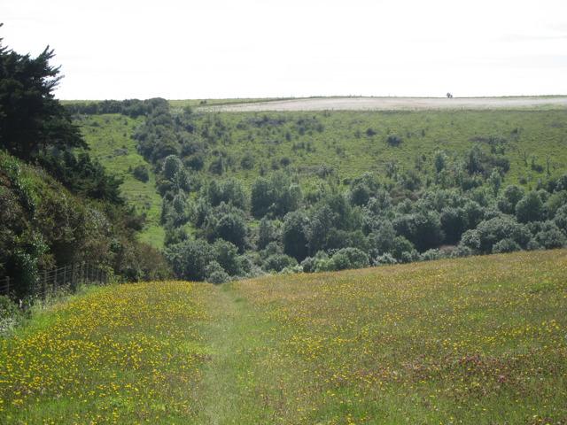 Field near Sunnyvale