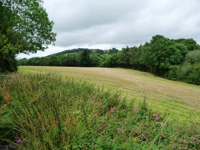 Mown field above a wooded stream