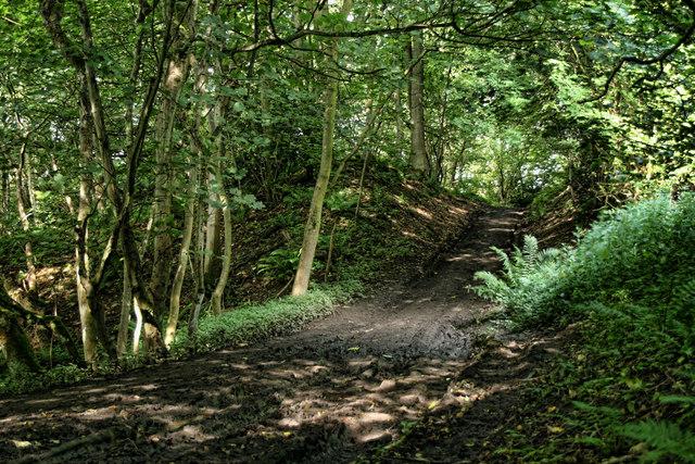 Whitcliffe Wood