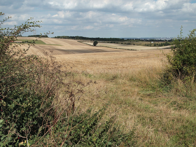Near Field Farm