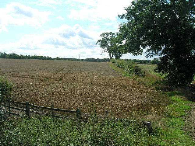 Farmland near Stillingfleet Hill Farm