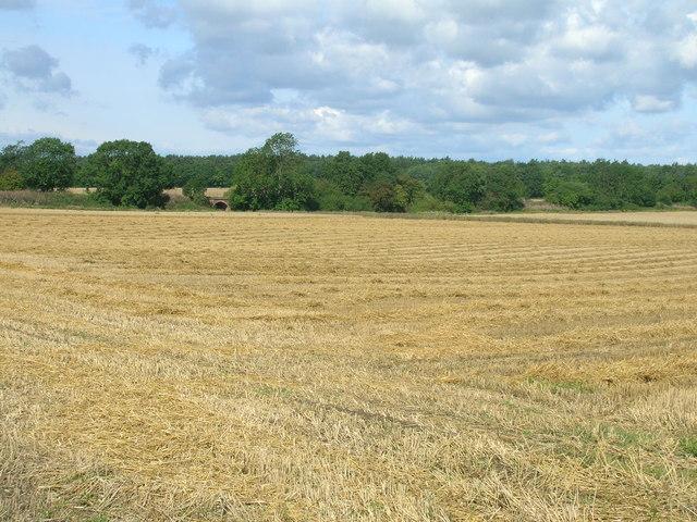Farmland towards Moreby Far Wood
