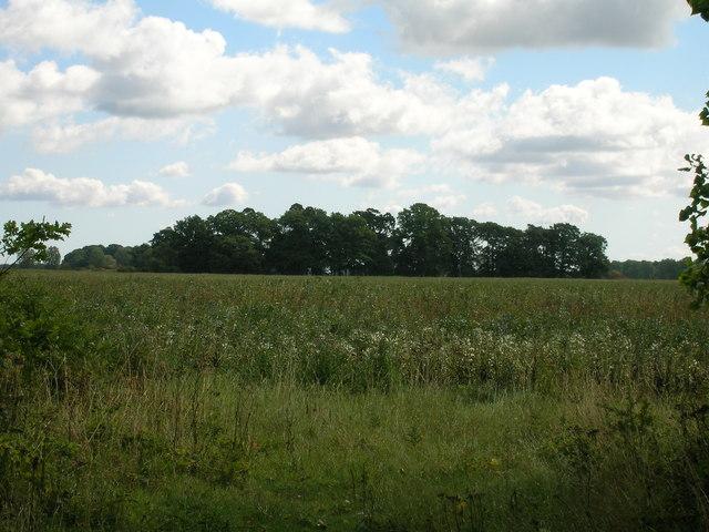 Farmland east of the A19