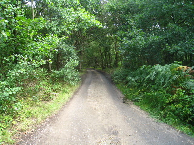 Access track - Yateley Common