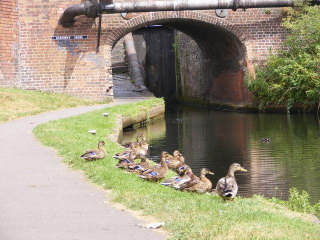 Dadford's Ducks