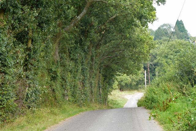 Lane towards Scallops Farm