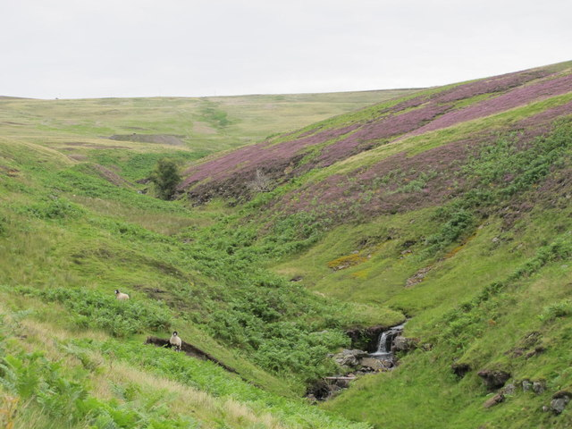 The valley of East Whiteley Burn