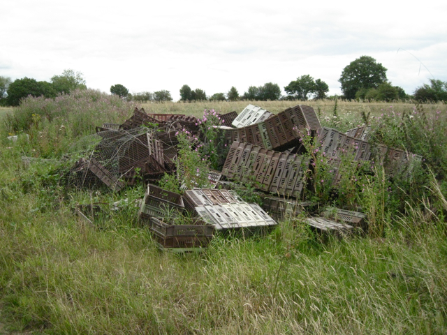 Discarded crop trays near Green Farm