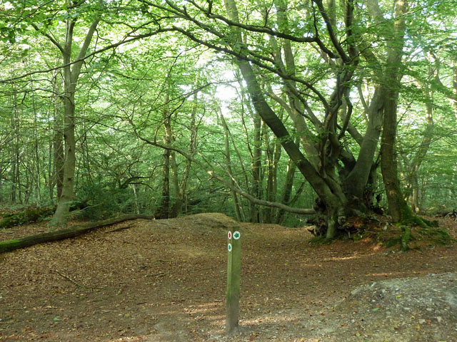 Octavia Hill Woodlands