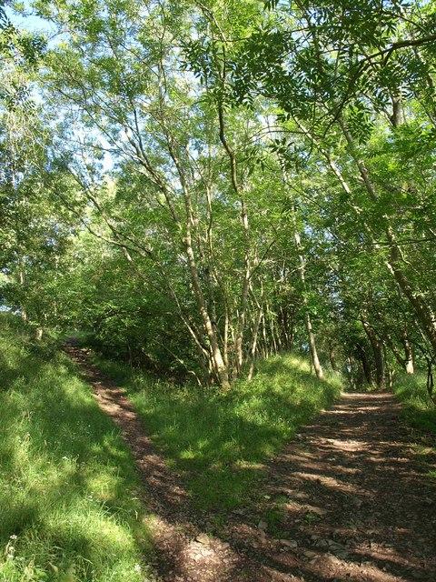 Paths to Dolebury