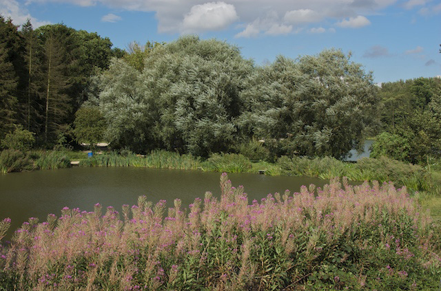 The Gorse pond at Risby Park