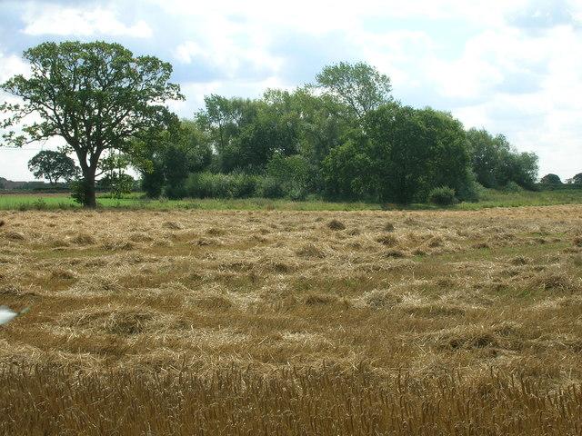Farmland, North Duffield Common