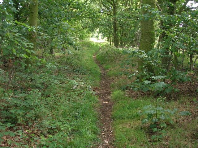 Sandy Lane (track)