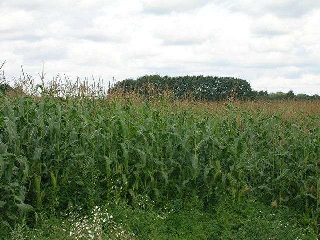 Farmland off Highfield North Lane