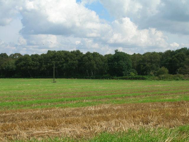 Farmland, Manor Farm
