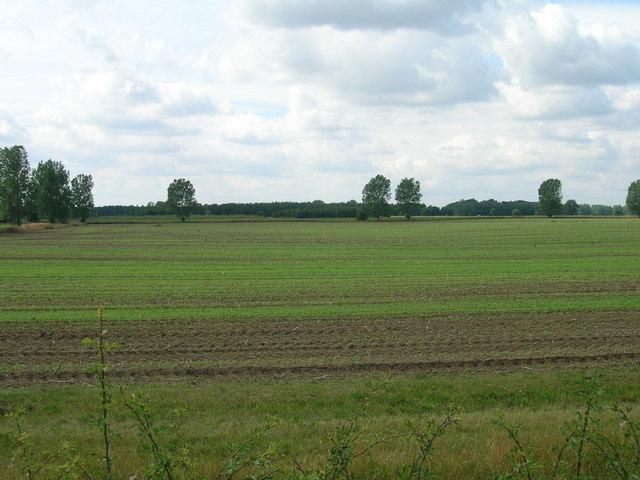 Farmland, Escrick Park