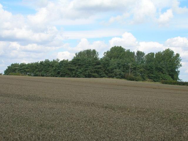 Farmland near Chequer Hall