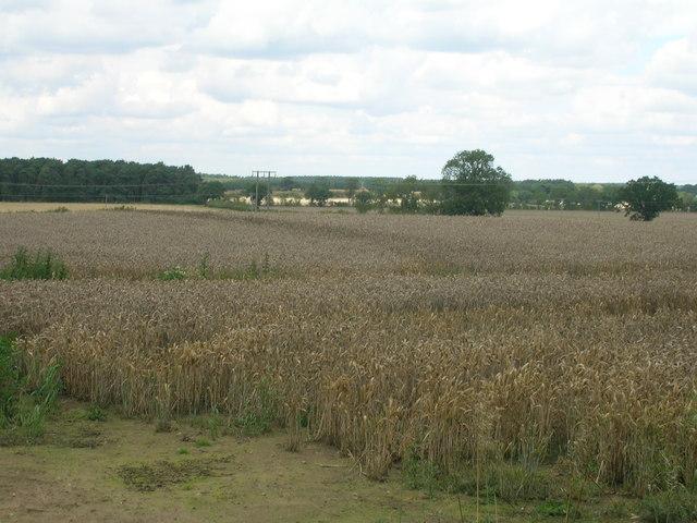 Farmland near Wheldrake Grange