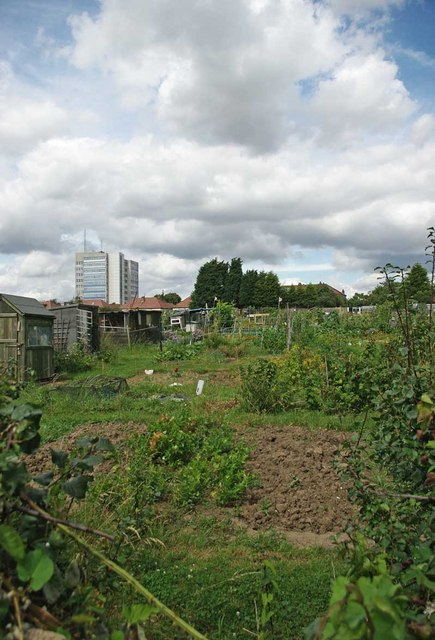 Allotments by the Prittlewell Brook