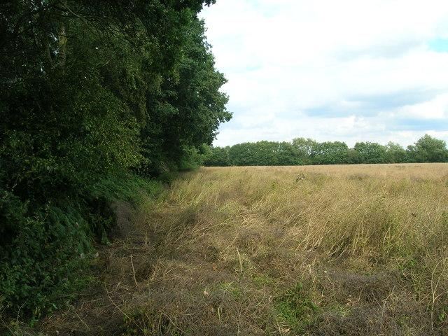 Farmland beside Glebe Plantation