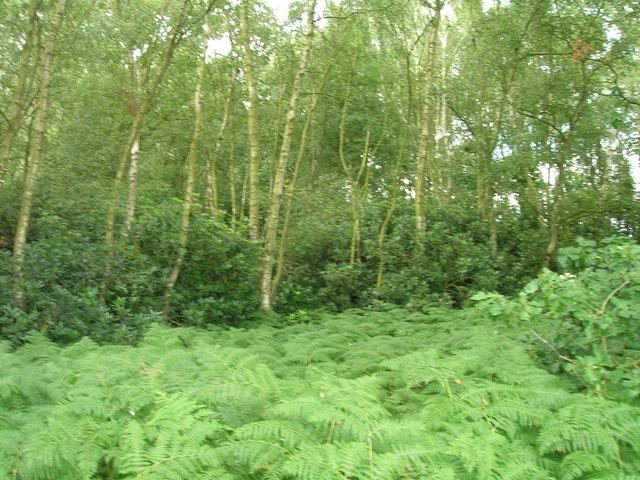 Glebe Plantation