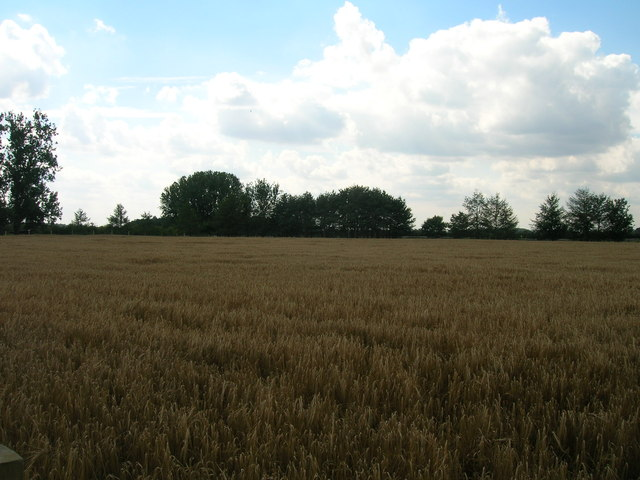 Farmland near Wigman Hall