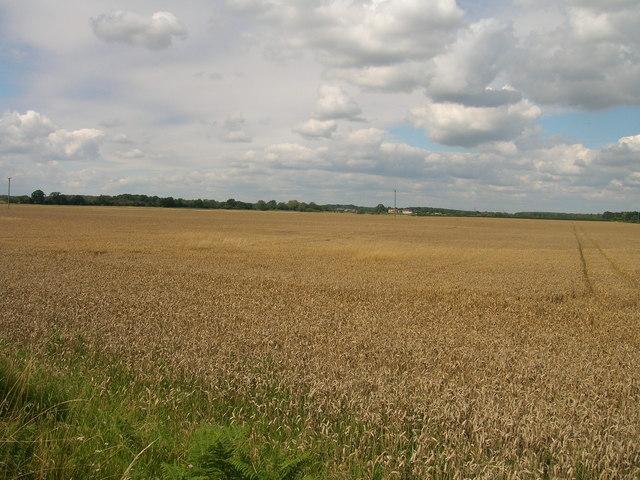 Farmland near Link Hall