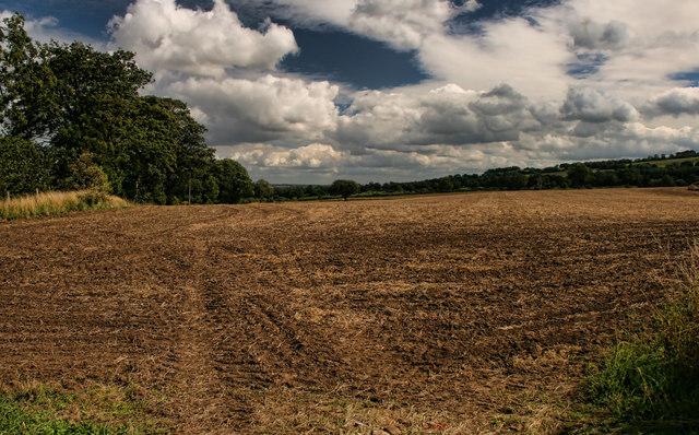 Low Fields
