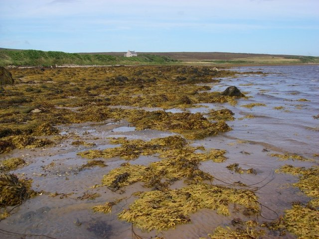 Intertidal zone at North Bay