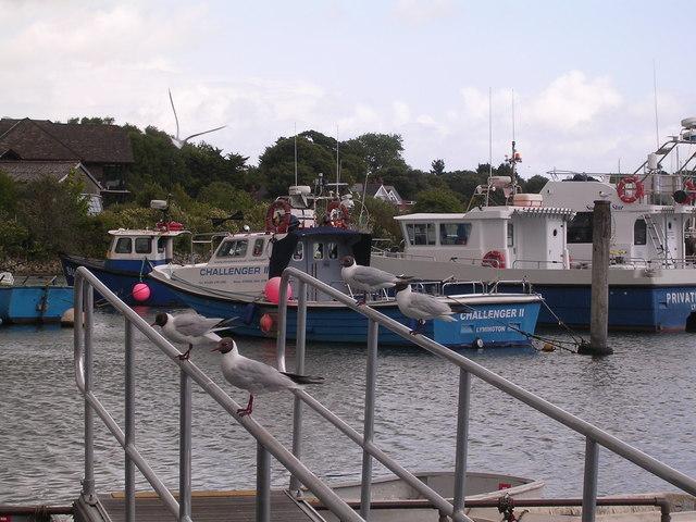 Seagulls in Lymington Harbour
