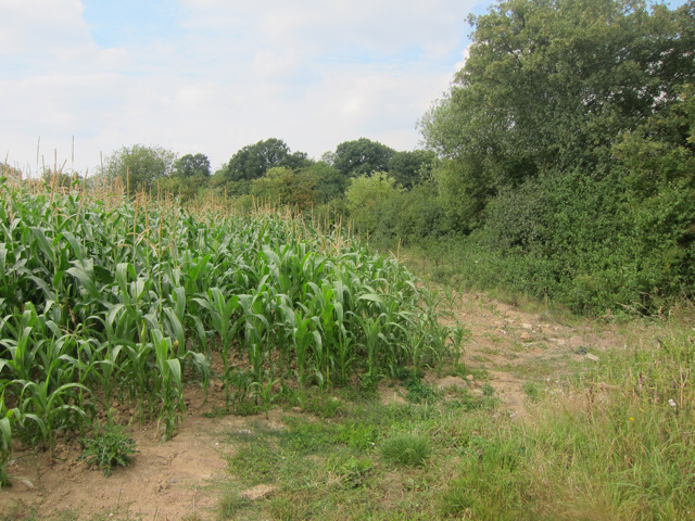 Corn field off Forstal Road
