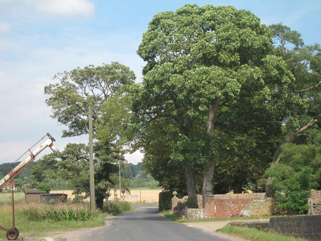 Forstal Road