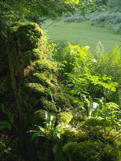 Ferns and moss, Back Lane