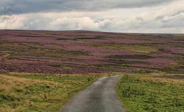 Holgate Moor