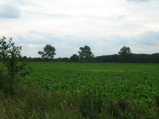 Farmland, Naburn Moor