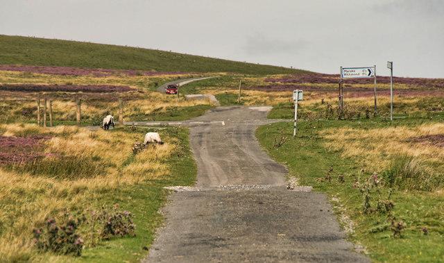 Holgate Pasture