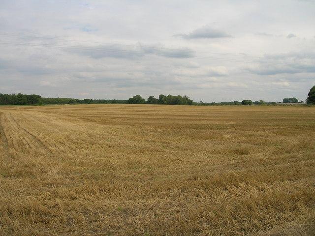 Farmland near Moreby Wood