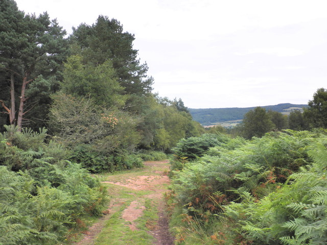 Track to Luccombe Hill