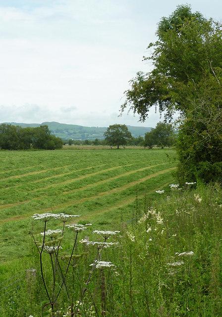 Farmland  by Cors Caron, Ceredigion