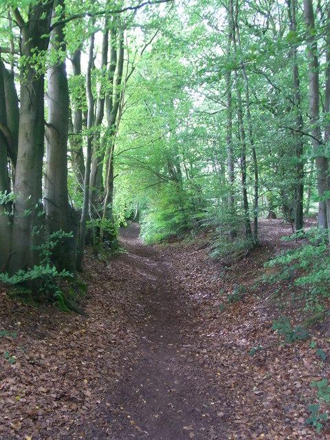 Bridleway along Upcote Plantation