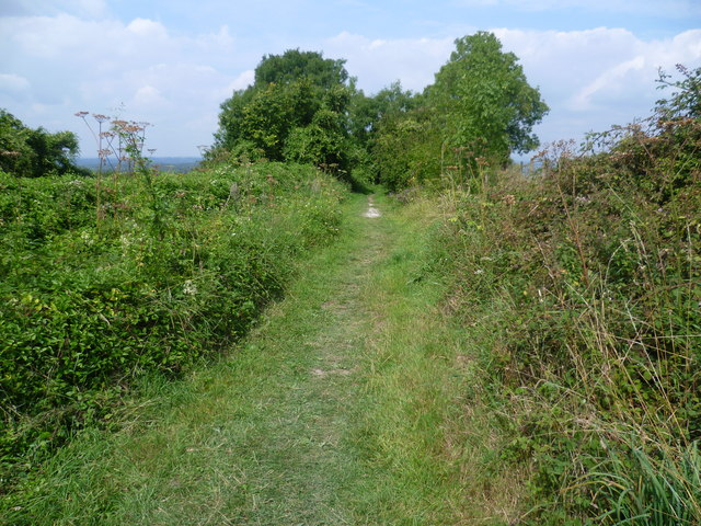 Track near the South Downs Way