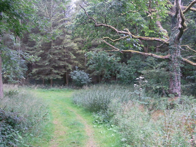 Path junction in Withington Woods
