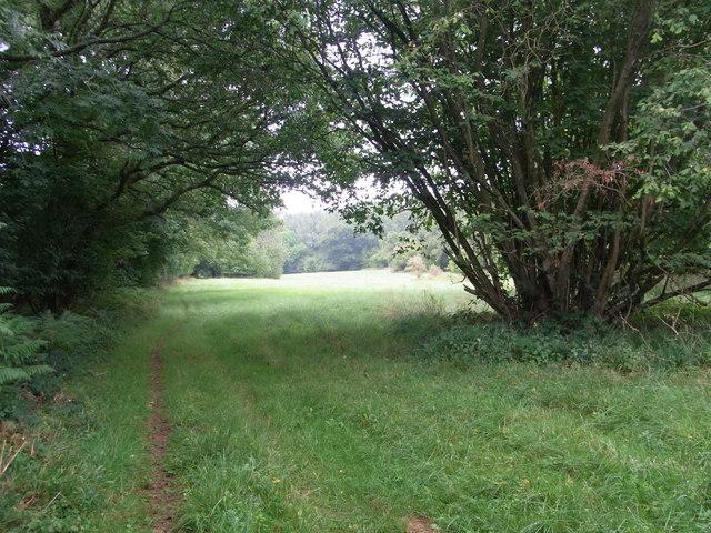 Bridleway  in Withington Woods