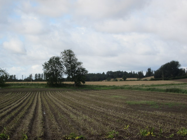 Hallyards Potato Field