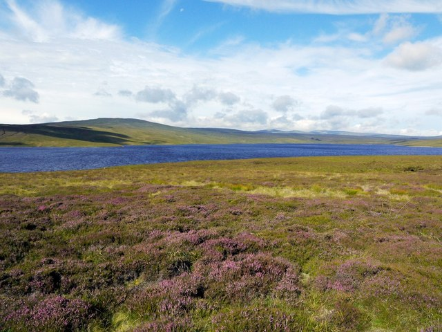 Heather moorland east of Cow Green Reservoir