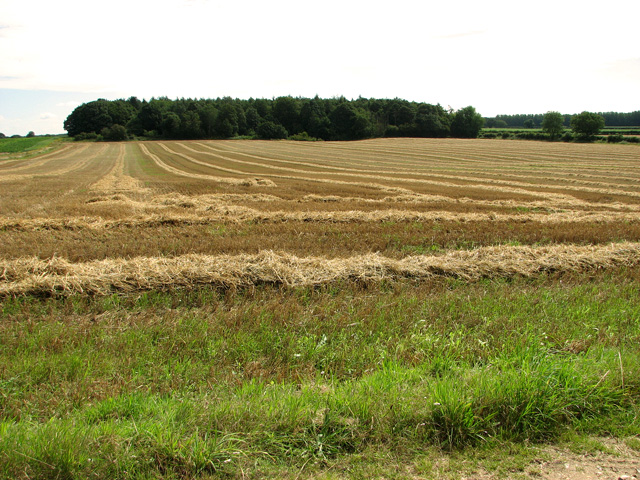 Harvested field at Bircham Common