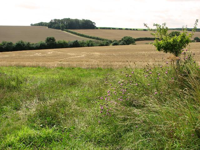Undulating farmland near Sedgeford