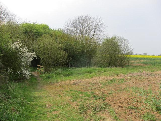 Footpath around unnamed wood