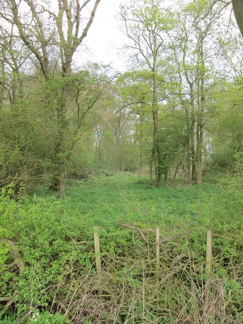Rands Wood